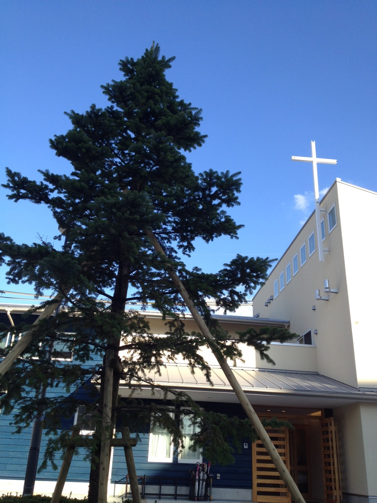 石橋教会のシンボルツリー